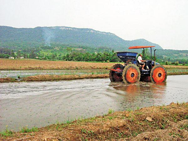 SC: 50 famílias produzem 15 mil toneladas de arroz em Itajaí