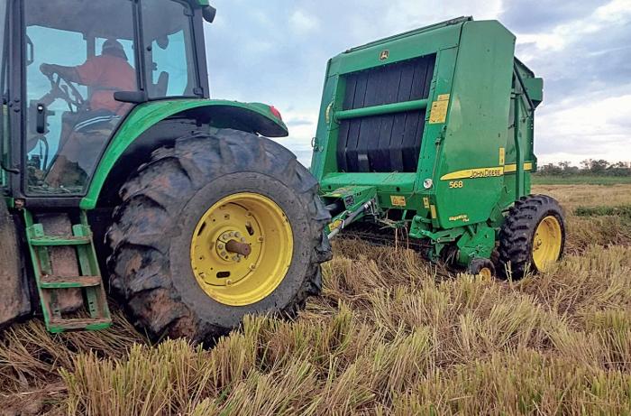 Pastejo na resteva do arroz exige cuidados