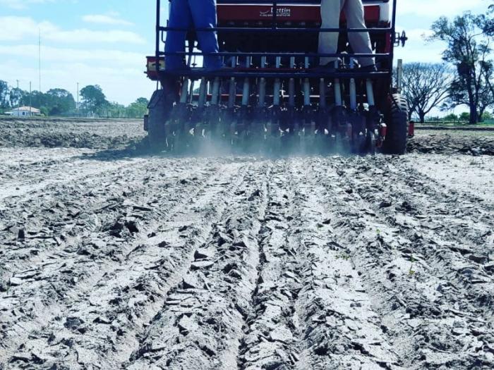 Plantio do arroz avança no Rio Grande do Sul