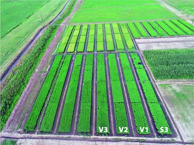 Projeto do Irga sobre a antecipação da irrigação no arroz consolida resultados