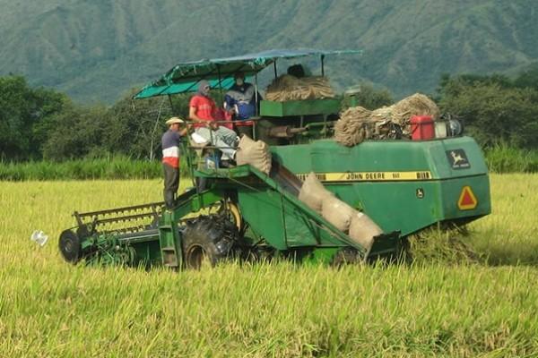 Arroceros de Campoalegre, Palermo, Yaguará y Villavieja recibirán kits de maquinaria