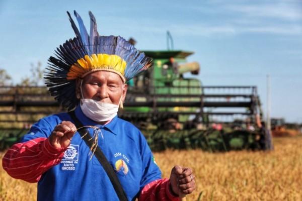 Comunidades Xavantes realizam primeira colheita de arroz em MT