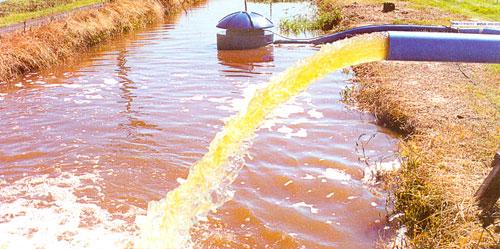 Água do arroz sai mais limpa do que entra