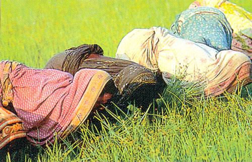 Mercado e política do arroz