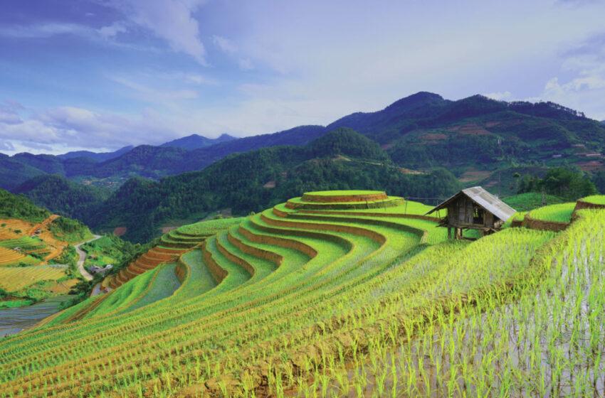 Produção de arroz da Coreia do Sul deve se recuperar