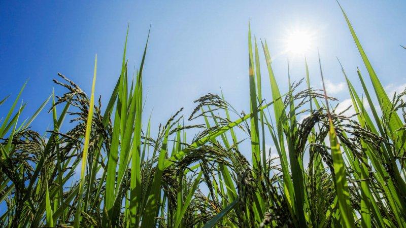 OGM orgânicos? Pode a agricultura alimentar 10 bilhões de pessoas em 2050?