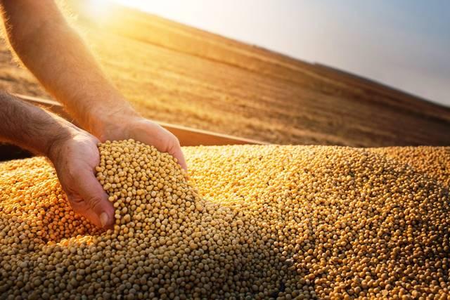 Soja: safra encerra e produtores focam na comercialização e manejo de inverno