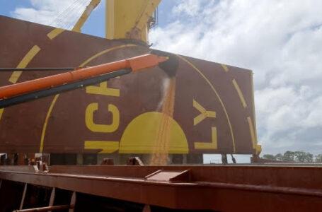 Exportação é um dos itens da pauta da comissão (Foto: Divulgação)